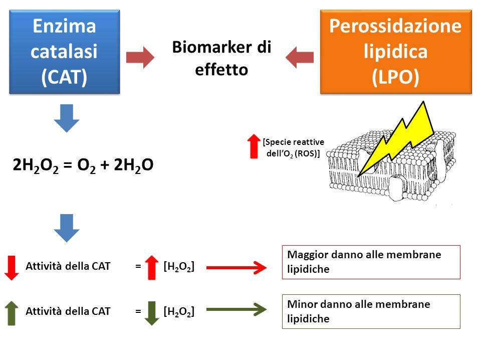 Perossidazione lipidica [Specie reattive dell'O2 (ROS)]